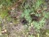 bear-scat